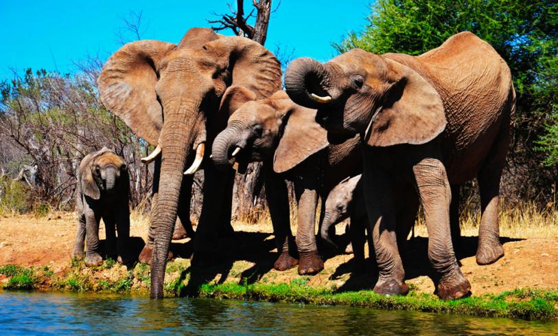 La savana sudafricana